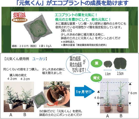 ecoplant_benzyamina